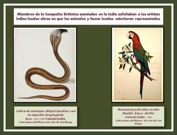 Pinturas de tema animalista Periodo de la Compania Britanica